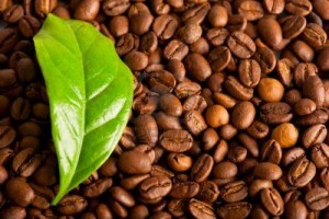 9055383-macro-of-coffee-beans-and-green-leaf-of-coffee-plant