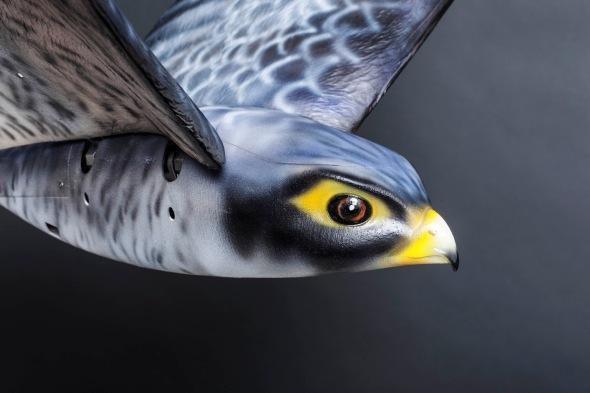 cfs-robird-grey-1